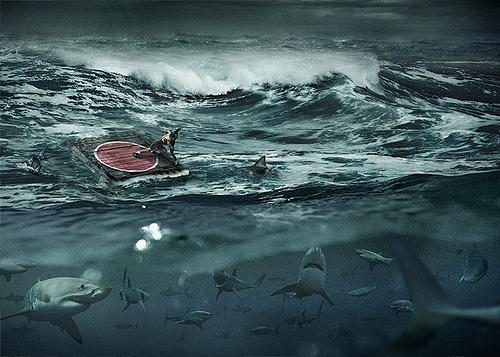 vida-entre-tiburones.jpg